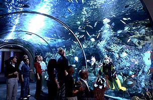 New Orleans Aquarium of the Americas